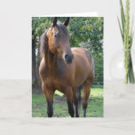 Bay Thoroughbred Horse Greeting Card