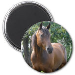 Bay Thoroughbred Horse Round Magnet