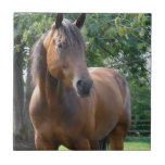 Bay Thoroughbred Horse Tile