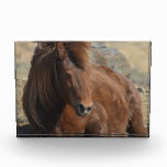 Beautiful Chestnut Icelandic Horse Acrylic Award