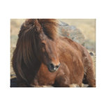 Beautiful Chestnut Icelandic Horse Canvas Print
