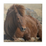Beautiful Chestnut Icelandic Horse Ceramic Tile