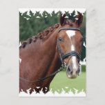 Braided Horse Mane Postcard