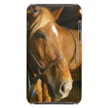 Chestnut Horse Design iTouch Case