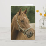 Chestnut Horse in a Field Greeting Cards