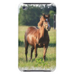 Chestnut Horse Standing iTouch Case