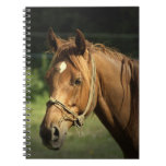 Chestnut Pony Notebook