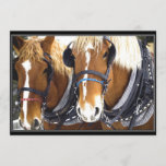 Clydesdale Draft Horse Invitation