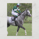 Dappled Grey Race Horse Postcards