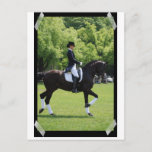 Dressage Horse Show Rider on Postcard