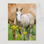 Equine Art Postcard