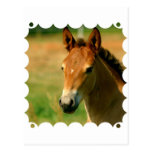 Filly Postcard