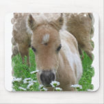 Foal Smelling Daisies Mouse Pad