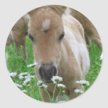 Foal Smelling Daisies Sticker