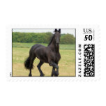 Friesian Horse Postage Stamp
