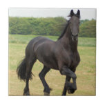 Friesian Horse Tile