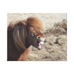 Funny Horse Making a Silly Face Canvas Print