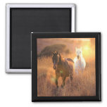 Galloping Wild Horses Square Magnet