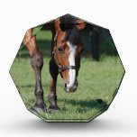 Gorgeous Quarter Horse Acrylic Award