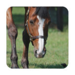 Gorgeous Quarter Horse Beverage Coaster