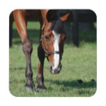 Gorgeous Quarter Horse Coaster