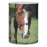Gorgeous Quarter Horse Flameless Candle