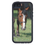Gorgeous Quarter Horse iPhone SE/5/5s Case