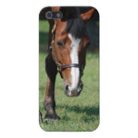 Gorgeous Quarter Horse iPhone SE/5/5s Cover