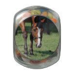Gorgeous Quarter Horse Jelly Belly Candy Jar