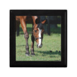 Gorgeous Quarter Horse Keepsake Box