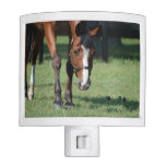 Gorgeous Quarter Horse Night Light