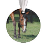 Gorgeous Quarter Horse Ornament