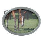 Gorgeous Quarter Horse Oval Belt Buckle