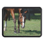 Gorgeous Quarter Horse Trailer Hitch Cover