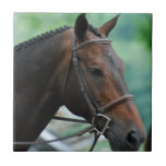 Gorgeous Warmblood Horse  Tile