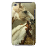 Gray Eventing Horse iTouch Case