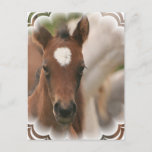 Horse Baby Postcard