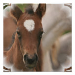 Horse Baby Poster Print