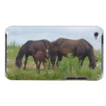 Horse Family Grazing  iTouch Case