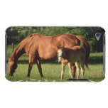 Horse Family iTouch Case