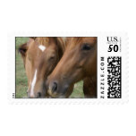 Horse Nuzzle Postage Stamp