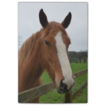 Lovable Quarter Horse Post-it® Notes