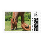 Mare and Colt Postage Stamp
