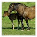 Mare and Foal Poster Print