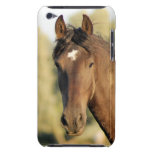 Morgan Horse iTouch Case