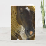 Mustang Horse Photo Greeting Card