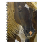 Mustang Horse Photo Notebook