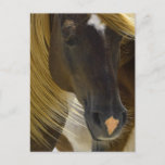 Mustang Horse Photo Postcard