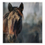 Mustang Horse Poster Print