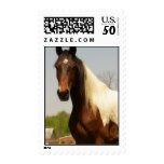 Paint Horse Postage Stamp